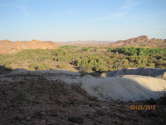 Ironwood trees and desert shrubs.
