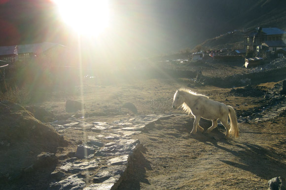Horse with the setting sun in Kyanjin Village, Nepal.