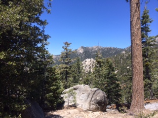 On the slopes of Mt. San Jacinto near Idyllwild.